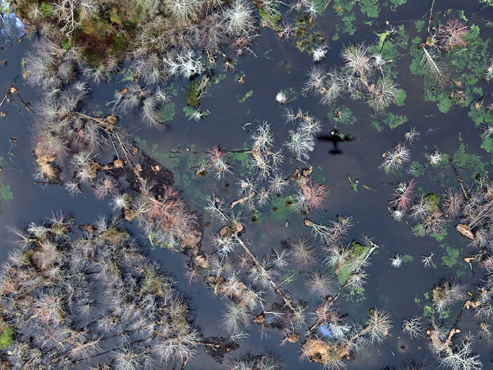 Wetlands Health Assessment